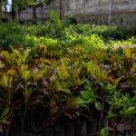 jardines-0455